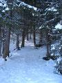 Durch tiefverschneiten Bergwald gings nach oben.