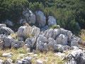 ... von Meter zu Meter, mal Latschen ... dann wieder Felsen die unseren Weg säumten.
