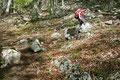 Rasch kam auch die Bestätigung. Voll ins Schwarze getroffen! Ab jetzt war es nur mehr Formsache. Ein Steinmännchen um das andere säumte den serpentinenreichen Steig durch den felsdurchsetzten Waldhang nach oben.