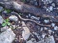 Ein Moment des Schreckens – eine Schlange mitten am Weg! Beim genaueren Hinsehen stellte sich jedoch heraus, dass es lediglich eine Blindschleiche war!