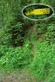 """Endlich! Der Alptraum eines jeden Bergwanderers, hunderte Meter auf Forststraßen, hatte sein Ende und wir bogen auf den eigentlichen """"Kamplsteig"""" ab."""