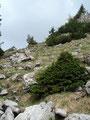 Über einen steinigen Steig ging es nun wieder einige Höhenmeter abwärts.