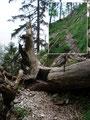 Am Ende der seilversichteren Passage galt es einen gefällten Baum mit einer Einkerbung zu überwinden.