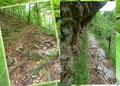 Nachdem die einleitenden ersten steilen Stufen überwunden waren, flachte der Wegverlauf wiederum etwas ab und führte entlang einer mit Drahtseil versicherten Felswand erneut unter dichteres Blätterdach.