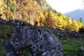 ... durch bunten und äußerst farbenfrohen Herbstwald hindurch ...