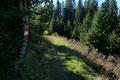 Im Anschluss daran passierte ich die Waldobergrenze und folgte nunmehr im Eilzugstempo den weiten Serpentinen des Westhanges nach unten.