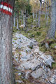 ... nochmal ca. 100 Höhenmeter den Bergwald empor ...