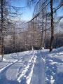 Durch den lichten Lärchenwald stapften wir talwärts.