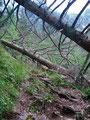 Auch vom Sturm gefällte Bäume konnten uns nicht vom Weg abbringen und so schritten wir immer weiter hinauf Richtung der Vorderen Sarsteinalm.
