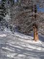 Der steile Waldhang war überwunden und das Gelände flachte etwas ab und wurde auch wieder lichter. Die Sonnenstrahlen genießend zogen wir weiter.