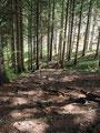 Raschen Schrittes setzte ich meinen Abstieg durch den Wald weiter fort. Mittlerweile blinzelte auch die Sonne immer mehr durch.