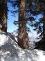 Ein weiterer Wegweiser zeigte Richtung Alpstein, doch …
