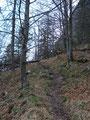 Nun wurde der laubbedeckte Waldweg durch einen mäßig ansteigenden Steig abgelöst.