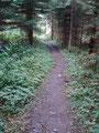… tauchten wiederum in den Wald ein, bis …