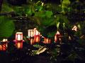 蓮池での灯篭流し