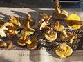 Herbsliche Pilzammlung