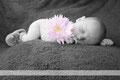 Babyshooting Babyfotos Newbornfotos Franzis Fotostudio Walle