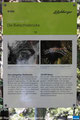 Fakten und Daten Bietschtalbrücke BLS Südrampe (© Remo Peer, www.pannerrail.com)