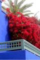Bleu majorelle, le rouge du Bougainvillé