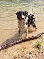 Murphy ist ein begeisterter Schwimmer und taucht sogar!