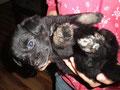 Mira bei ihrer Pflegefamilie, sie ist ca. 6 Wochen alt <3