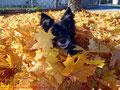 Herbst 2012 ;)