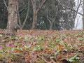 C 林間散策コース マップ21番