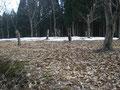 林間散策コース