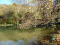 Branches sur étang
