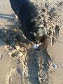 Buddeln im Sand ist meine Leidenschaft - bis das Wasser kommt