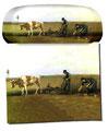 Artikel Nr. 9174 - Kartoffelsetzen - van Gogh