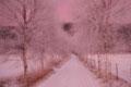 Birkenallee / Bjørkeallé på Storemyr, Skien
