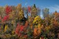 Halvmåne over høstskog / Halbmond über Herbstwald