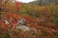 Høstskog ved / Herbstwald am Fulufjell