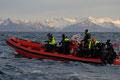 """Das Rib-Boot von """"Lofoten opplevelser"""" / Rib-båten til """"Lofoten opplevelser"""""""