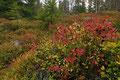 I høstskogen / Im Herbstwald, Trillemarka