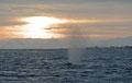 In den Sonnenuntergang... / Mot solnedgangen...