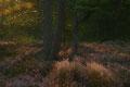 Eventyrskog I / Märchenwald I, Myra