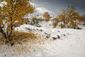 Herbstfarben und Schnee / Høstfarger og snø, Hagesæter, Hjerkinn