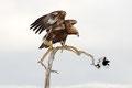 """""""Nimm deine Flügel unter die Beine und mach´ dass du fortkommst!"""" / """"Kom deg vekk herfra!"""""""