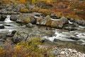 Die Driva in Herbstfarben / Drivaelva i høstfarger