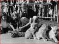 Emil, au cirque Knie, avec des lionceaux