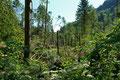 Auswirkungen des Tornados welcher am 13.05.2015 über den Südschwarzwald hinwegfegte