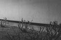 was sich rühren musste, rührte sich #4, Hahnemühle Fine Art matt, 50x70 cm, Auflage von 3, 2015