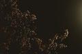 was sich rühren musste, rührte sich #1/2, Hahnemühle Fine Art matt, 50x70 cm, Auflage von 3, 2014