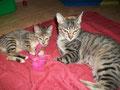 Janis und Miku