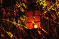 Fête des lumières Valence