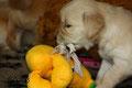 Frau Gelb spielt gelb
