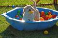 Happydog...!