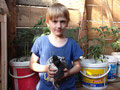 das sind die Seidenhühnerküken, Sydneys ganzer Stolz